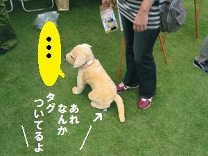 タグ犬.jpg